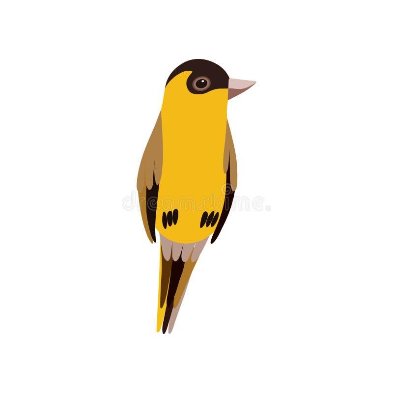 Liten fågel, gullig orange illustration för Budgie hem- husdjurvektor royaltyfri illustrationer
