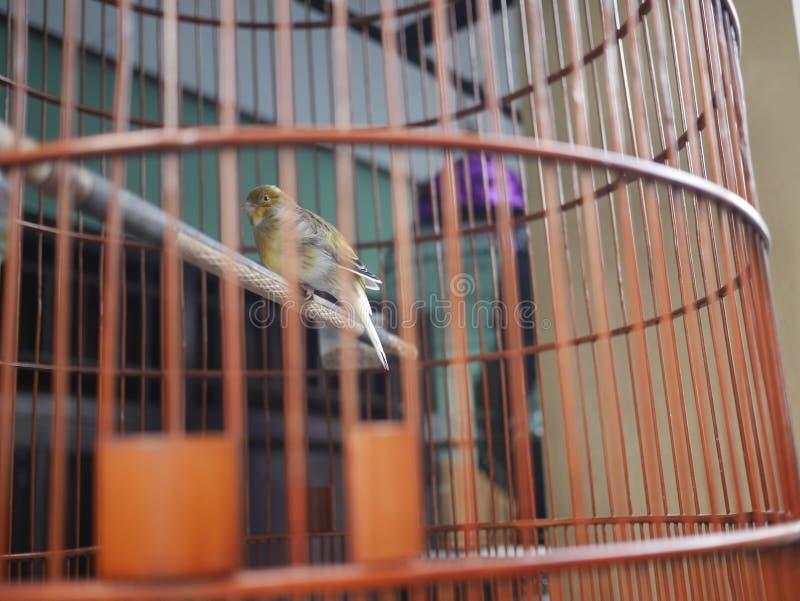 Liten fågel i en bur arkivfoton