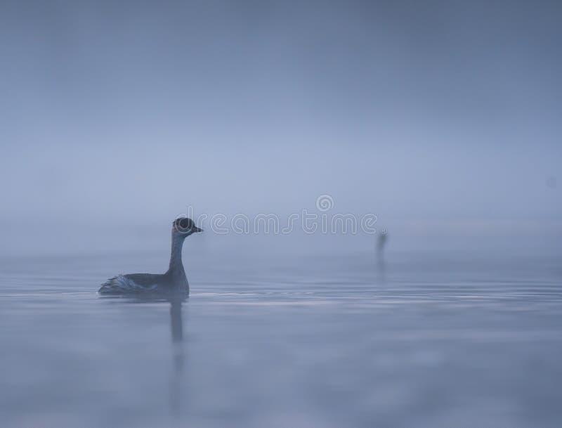 Liten fågel i sjön royaltyfri bild