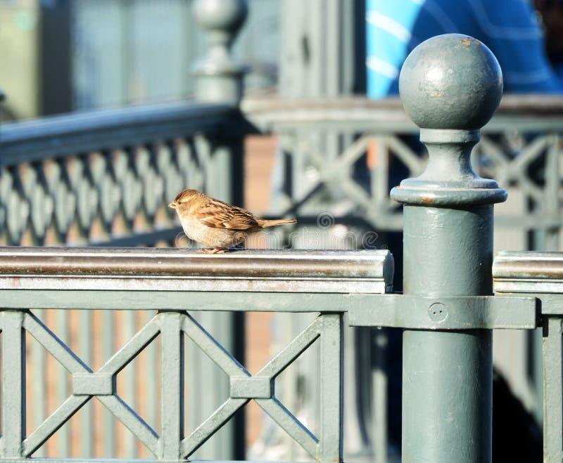 Liten fågel på en stång arkivbild