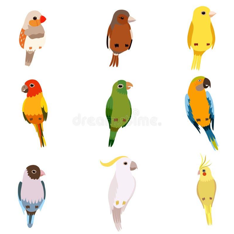 Liten fågeluppsättning, Amadin, sparv, kanariefågel, papegoja, kakadua, gullig hem- husdjurvektorillustration vektor illustrationer