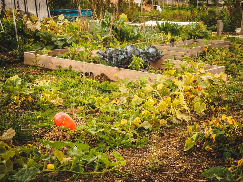 Liten familjträdgård fotografering för bildbyråer