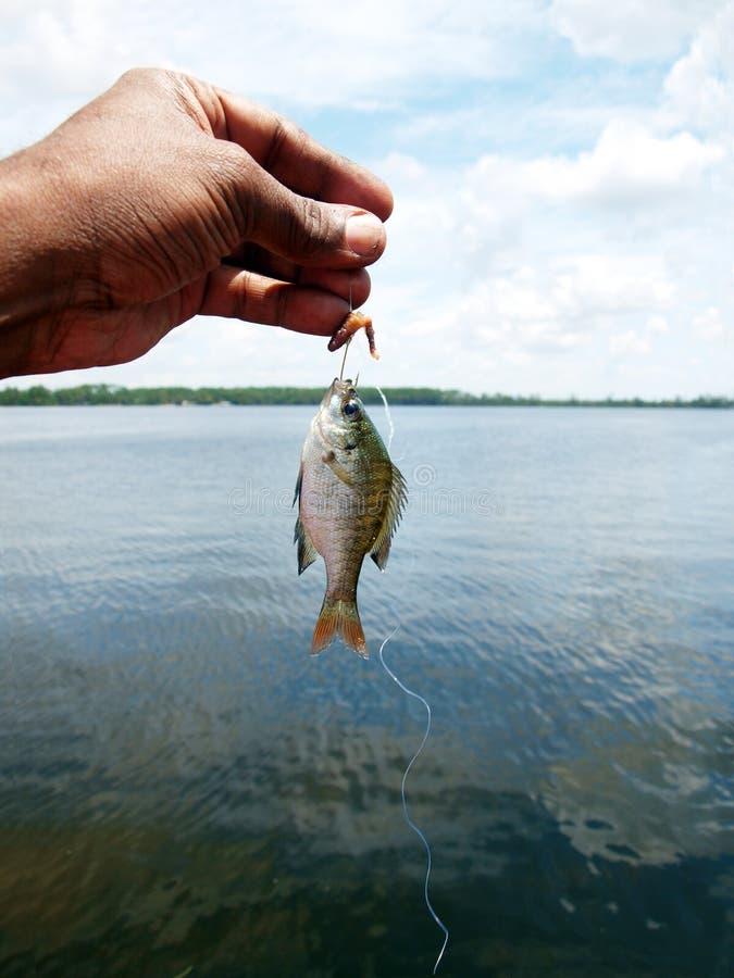 Liten fisk royaltyfri bild