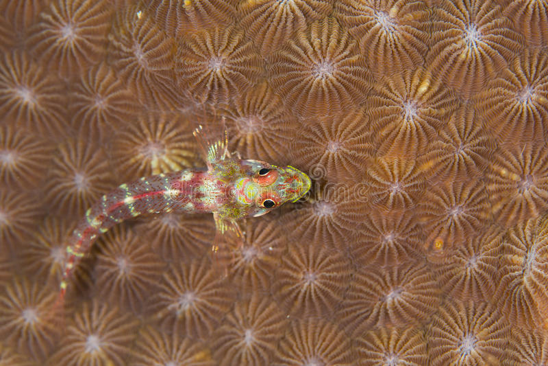 liten fisk royaltyfri foto