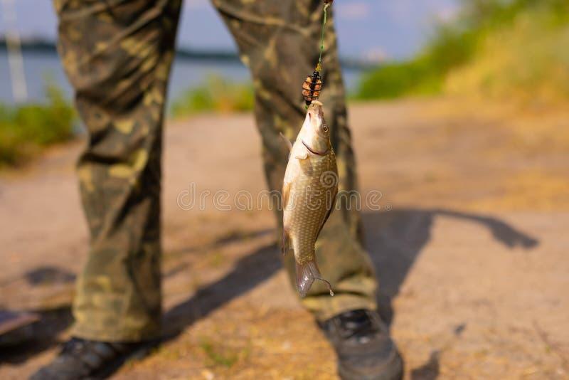 Liten fisk på en krok arkivfoto