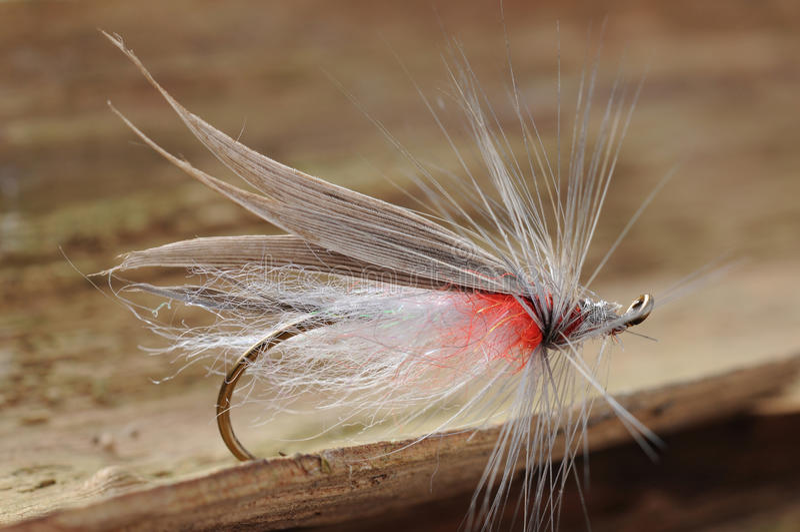 Liten fiskfluga royaltyfria foton