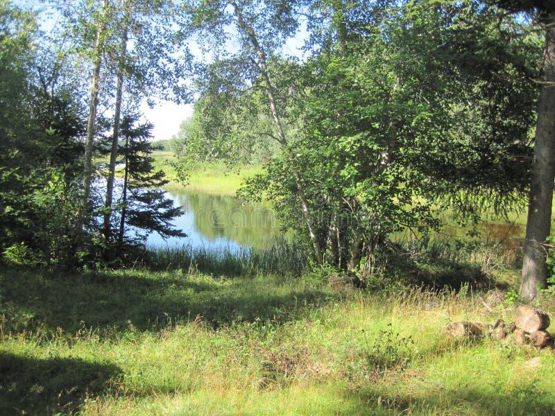 Download Liten Fjärd Till Och Med Träd Arkivfoto - Bild av öppning, skog: 76704242