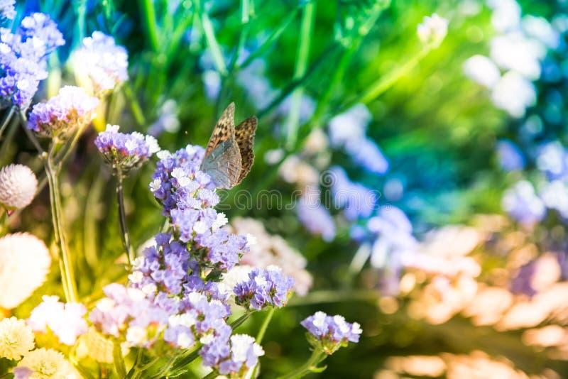 Liten fjäril i en färgrik trädgård arkivfoto