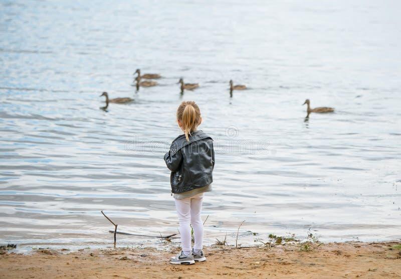 Liten flicka i omslagsställning på kusten av sjön och blickarna på vattnet och änderna tillbaka sikt arkivbilder