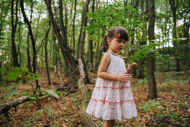 Liten flicka i skogen med ormbunkar arkivfoton
