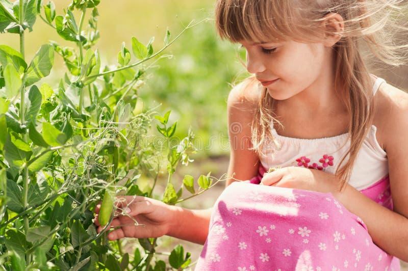 Liten flicka i trädgården arkivbilder