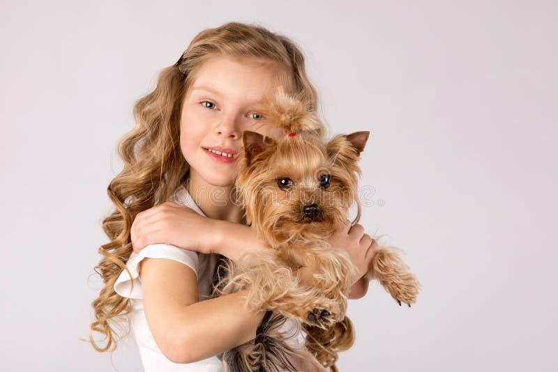 Liten flicka med den vita Yorkshire Terrier hunden som isoleras på vit bakgrund Ungar daltar kamratskap royaltyfri fotografi