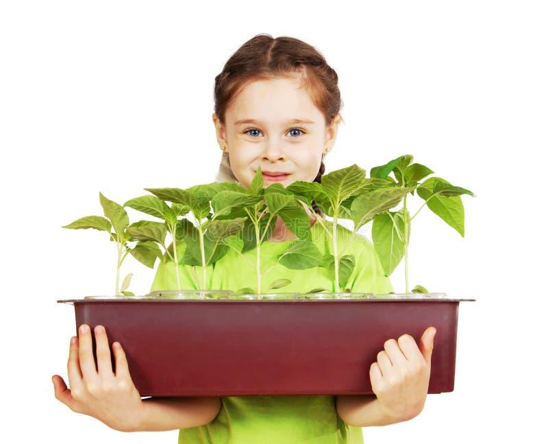 Liten flicka med en ask av plantor som isoleras över vit arkivbilder