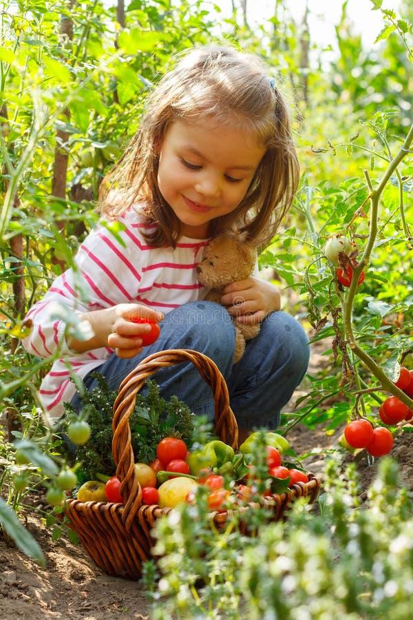 Liten flicka med grönsakkorgen arkivbilder