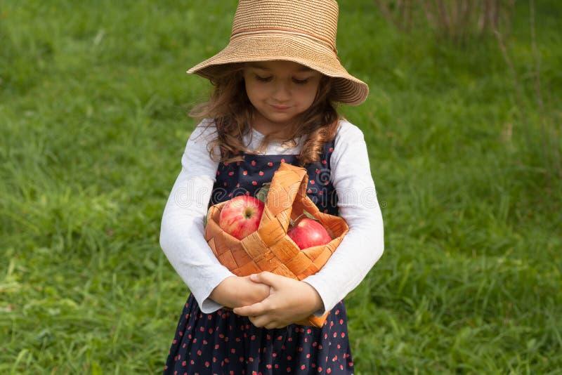 Liten flicka med röda äpplen i korg royaltyfri foto