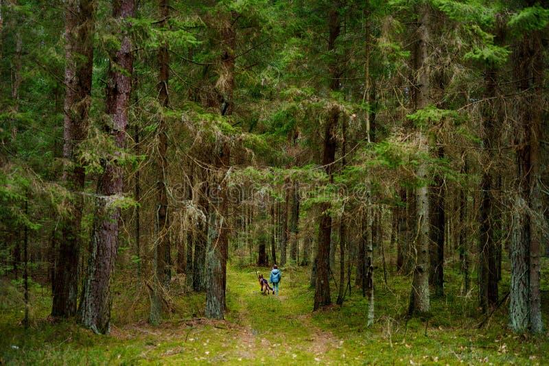 Liten flicka och hennes stora hund som tar en gå i en mörk skog arkivbilder