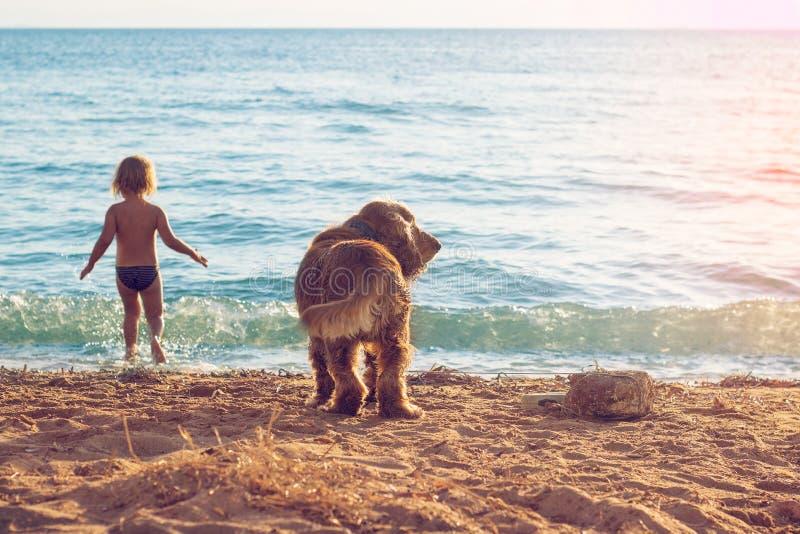 Liten flicka och hunden på stranden arkivbild