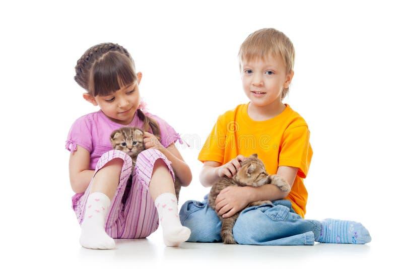 Liten flicka och pojke som spelar med isolerade älskvärda skotska kattungar royaltyfri fotografi