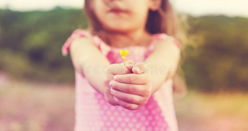 Liten flicka` s räcker att rymma en blomma royaltyfri bild