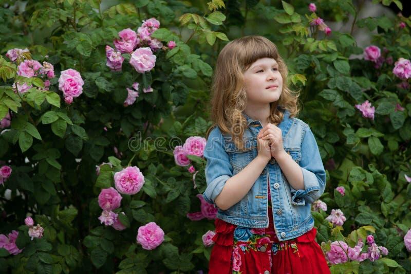 Liten flicka som ber eller drömmer i sommarträdgård med rosa färgrosen arkivfoton