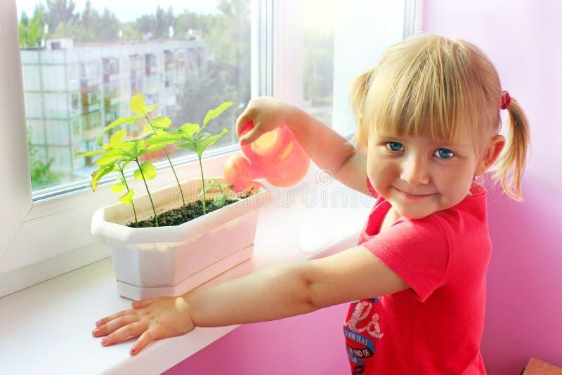 Liten flicka som bevattnar unga växter i kruka Sandig öken bak fönster av rum var liten flickauppehälle royaltyfria bilder
