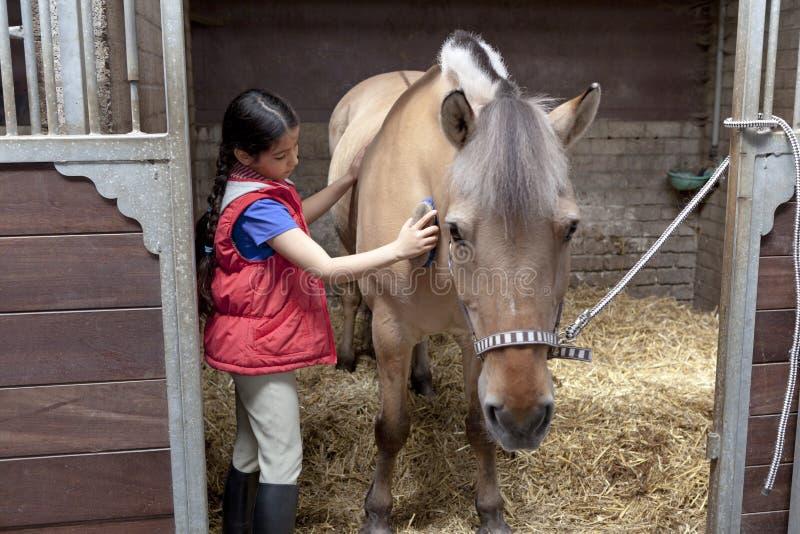 Liten flicka som borstar henne favorit- häst arkivbilder