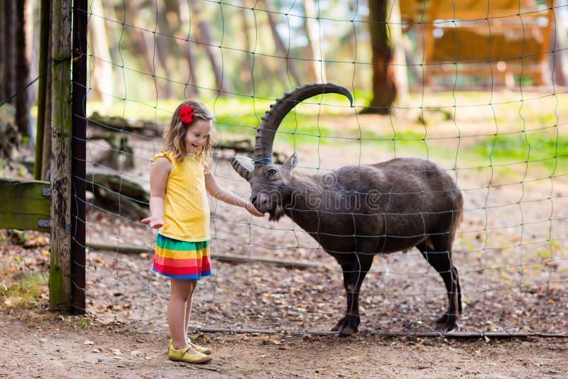 Liten flicka som matar den lösa geten på zoo arkivfoton