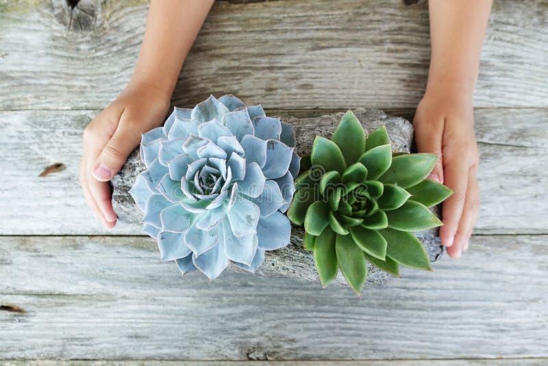 Liten flicka som rymmer blommor eller kaktusvariation i stenblomkruka på den red ut trätabellen royaltyfri fotografi