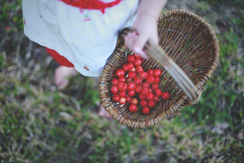 Liten flicka som rymmer en korg av körsbär arkivfoto