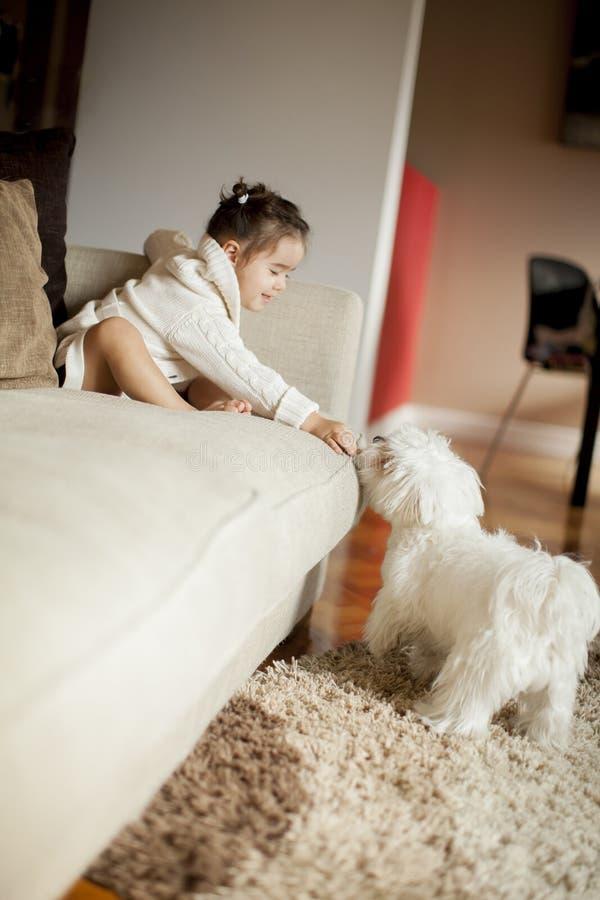 Liten flicka som spelar med den vita hunden i rummet arkivbilder