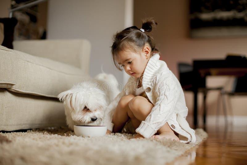Liten flicka som spelar med den vita hunden i rummet arkivfoto