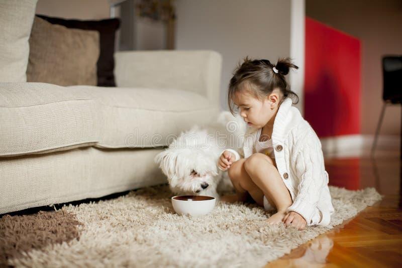 Liten flicka som spelar med den vita hunden i rummet fotografering för bildbyråer