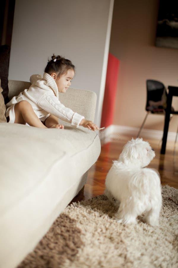 Liten flicka som spelar med den vita hunden i rummet arkivbild