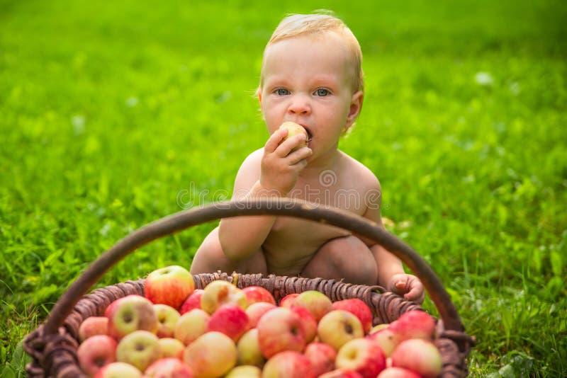 Liten flicka som spelar med en korg av äpplen i trädgården arkivbild