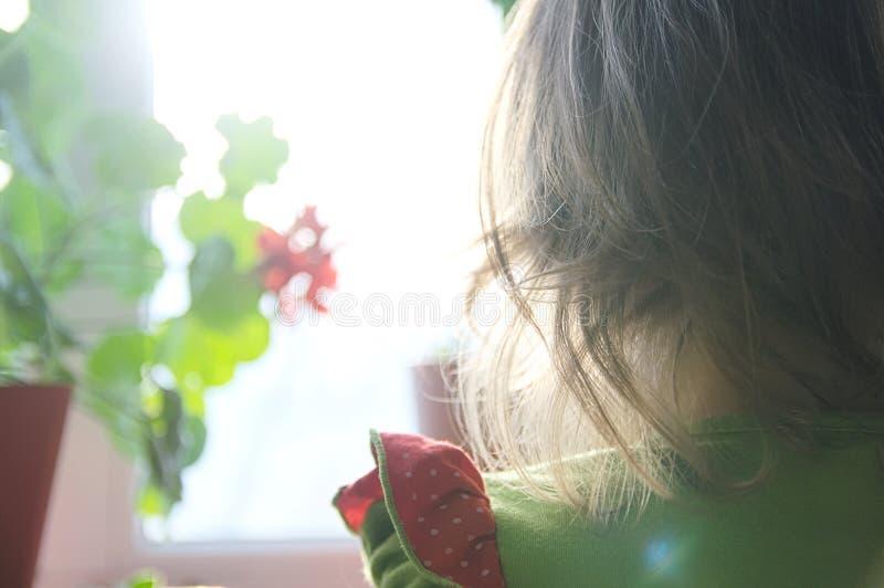 Liten flickabaksidasikt som ser utanför fönstret glödande solsken för krullningshår royaltyfria bilder