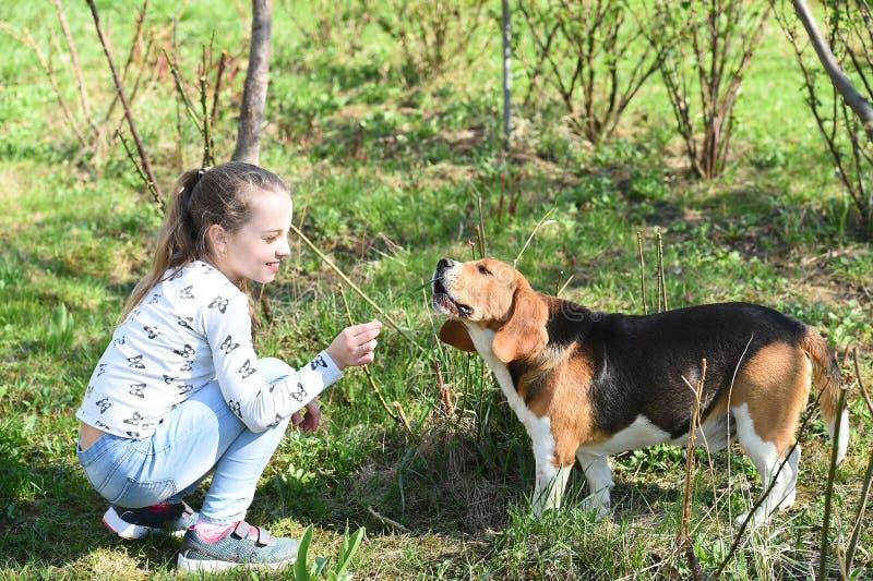 Liten flickadrevhund på sommarnaturen Barnlek med den älsklings- vännen på solig dag Unge med beaglet på utomhus- ny luft Barndom royaltyfri fotografi