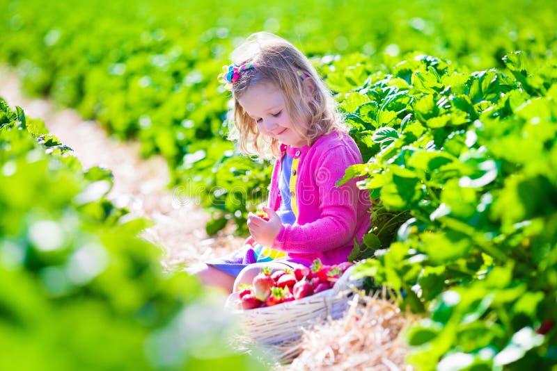 Liten flickaplockningjordgubbe på en lantgård arkivfoto