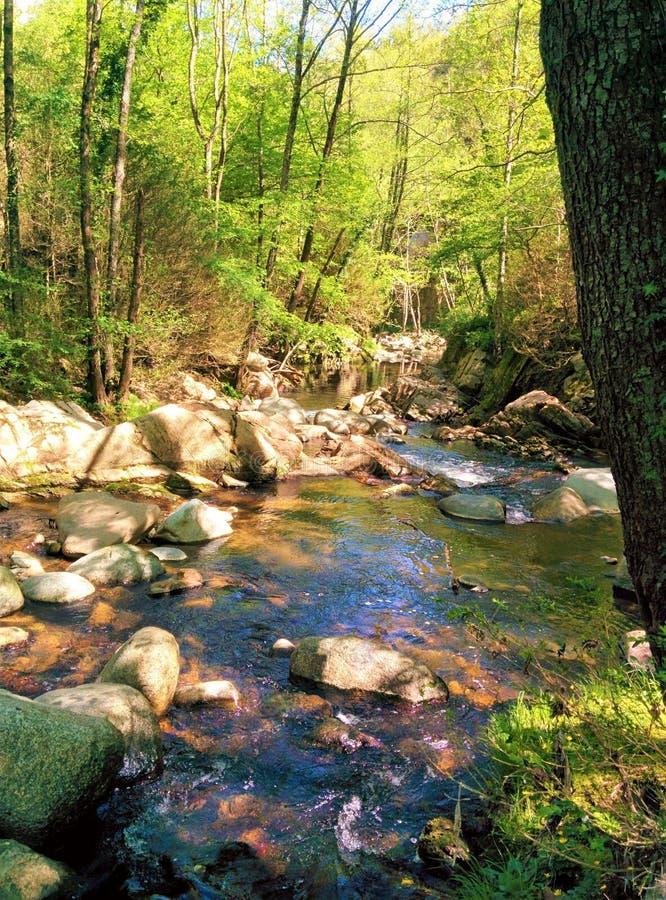 Liten flod bland skogen mycket av liv royaltyfri fotografi