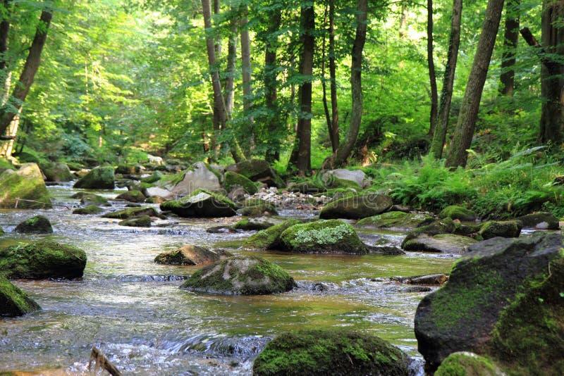 Liten flod i den gröna skogen arkivfoto
