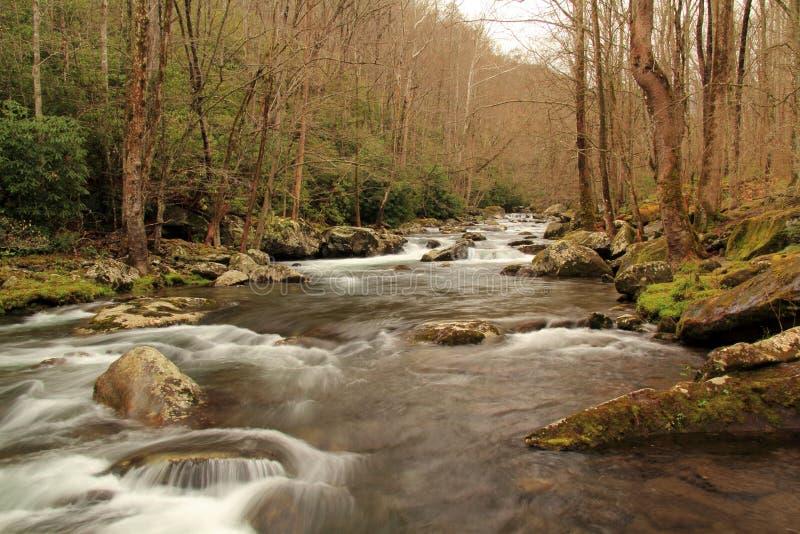 Liten flod i stora Smokey Mountains National Park fotografering för bildbyråer