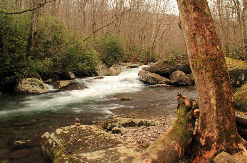 Liten flod i stora Smokey Mountains National Park royaltyfri bild