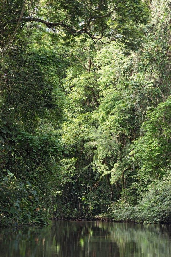 Liten flod med den tätt skogsbevuxna kusten i den Tortuguero nationalparken, Costa Rica royaltyfri foto