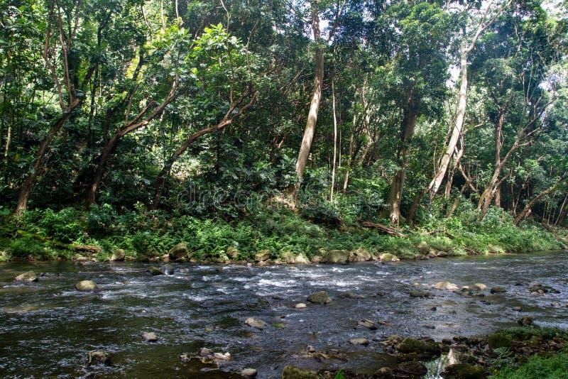 Liten flod på Kauai arkivbilder