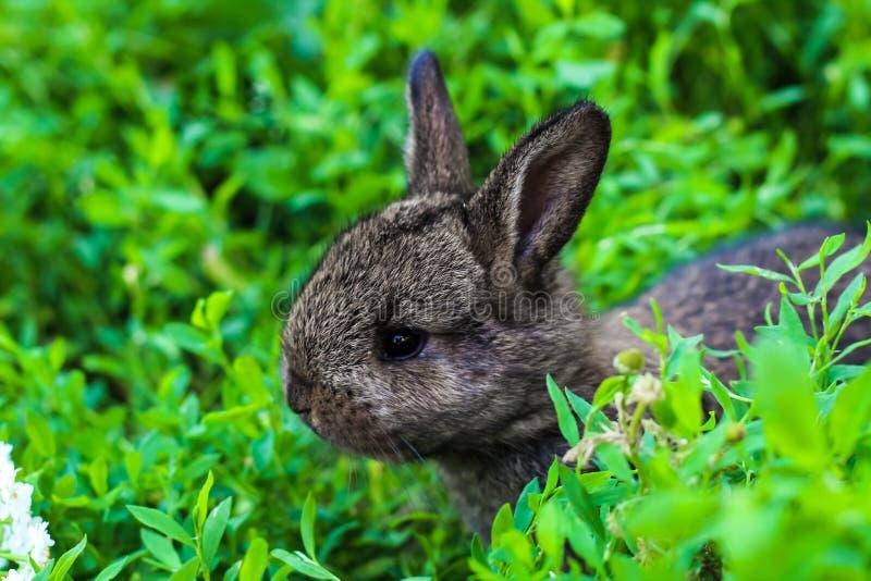 Liten fluffig kanin som lurar i det gröna gräset arkivfoton