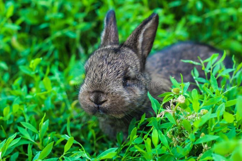 Liten fluffig kanin som lurar i det gröna gräset fotografering för bildbyråer