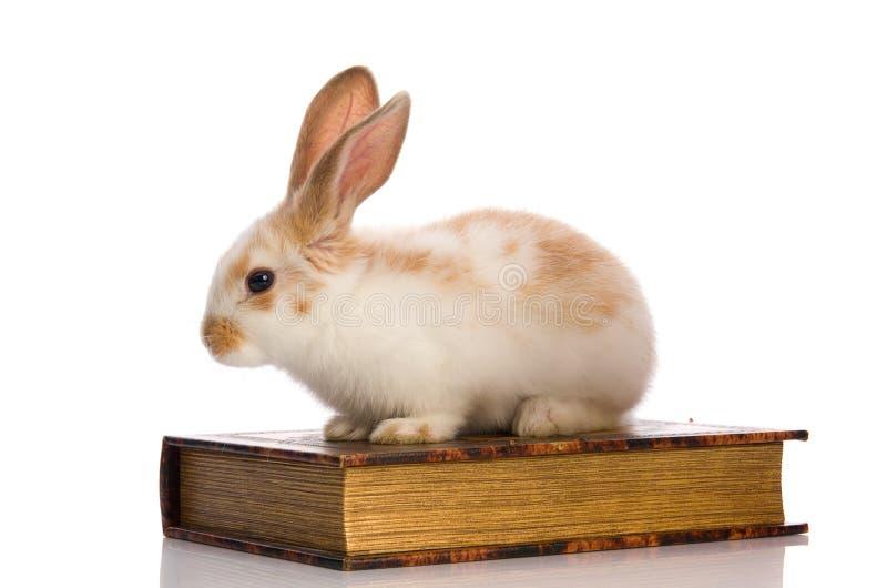 Liten fluffig kanin som sitter på boken arkivbild