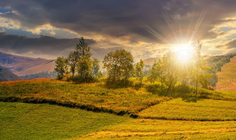 Liten fruktträdgård på ett gräs- lantligt fält på solnedgången royaltyfri bild