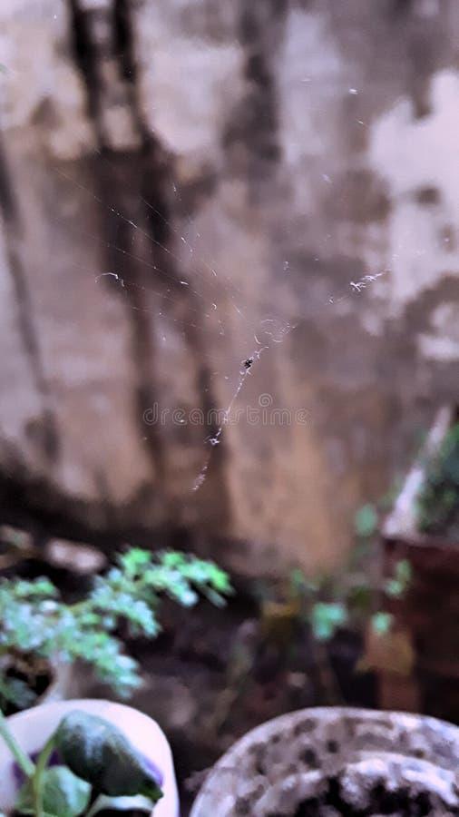 liten funktionsduglig spindel arkivfoto