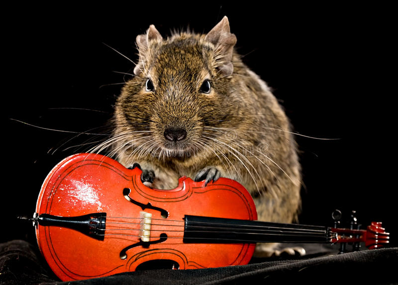 Liten gnagare med violoncellen royaltyfria bilder