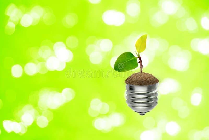 Liten grön groddträdtillväxt i ljus kula med bokehljus i bakgrunden royaltyfri bild